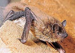 evening_bat
