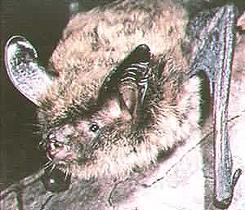 keens bat